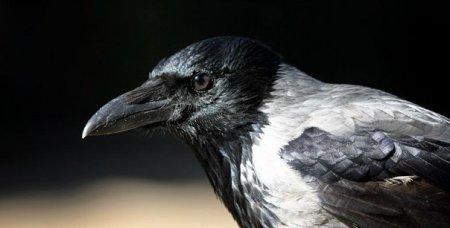 Photo of Подстава от вороны